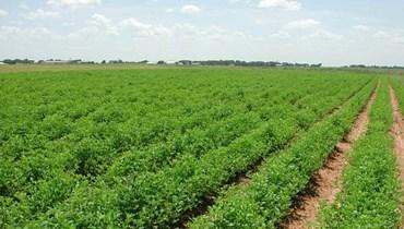استصلاح أراضٍ زراعية