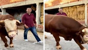 الشيف بوراك مع بقرة عيد الاضحى