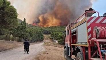 حرائق في غابات تونس