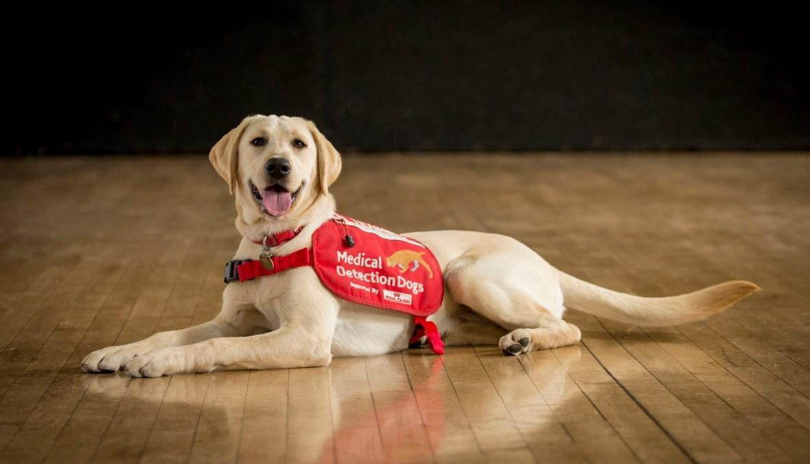 كلاب مدربة على اكتشاف المصابين بالكوفيد
